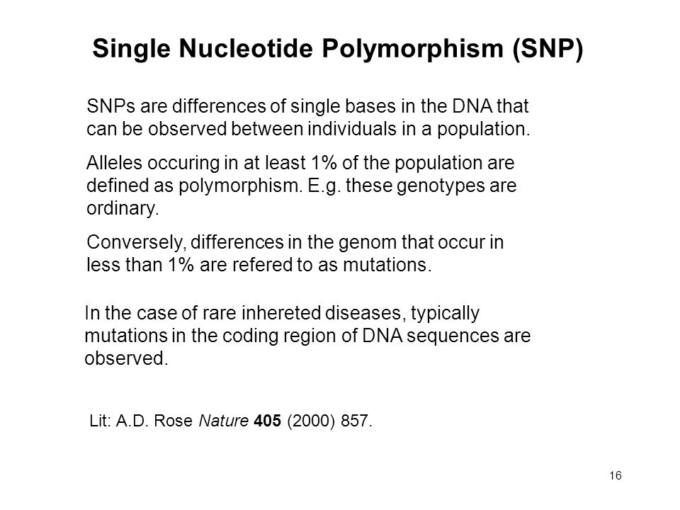 16 Single Nucleotide Polymorphism (SNP) SNPs are differences of single bases in the DNA that can be observed between individuals in a population.