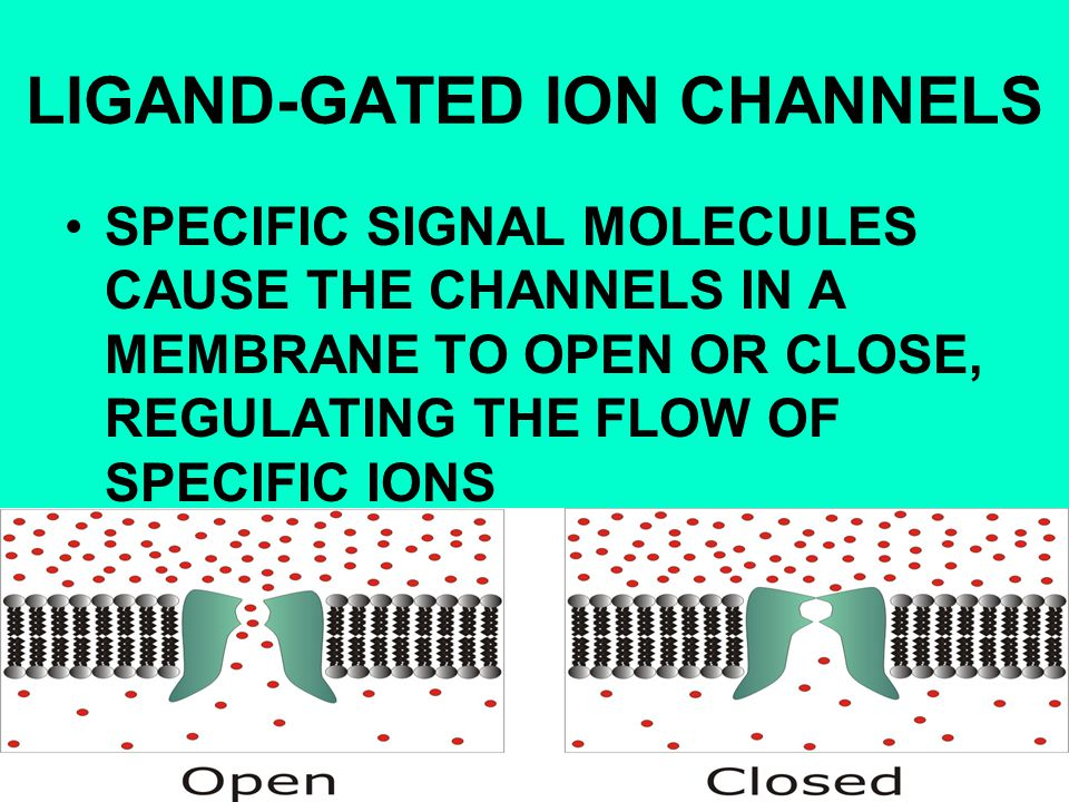 LIGAND-GATED ION CHANNELS SPECIFIC SIGNAL MOLECULES CAUSE THE CHANNELS IN A MEMBRANE TO OPEN OR CLOSE, REGULATING THE FLOW OF SPECIFIC IONS