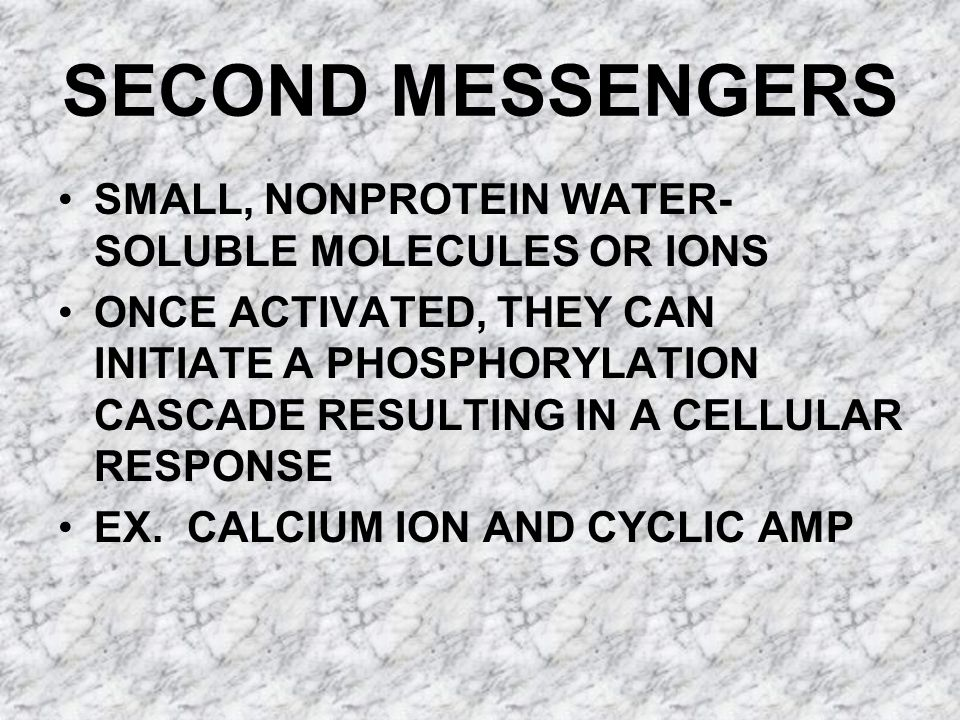 SECOND MESSENGERS SMALL, NONPROTEIN WATER- SOLUBLE MOLECULES OR IONS ONCE ACTIVATED, THEY CAN INITIATE A PHOSPHORYLATION CASCADE RESULTING IN A CELLULAR RESPONSE EX.