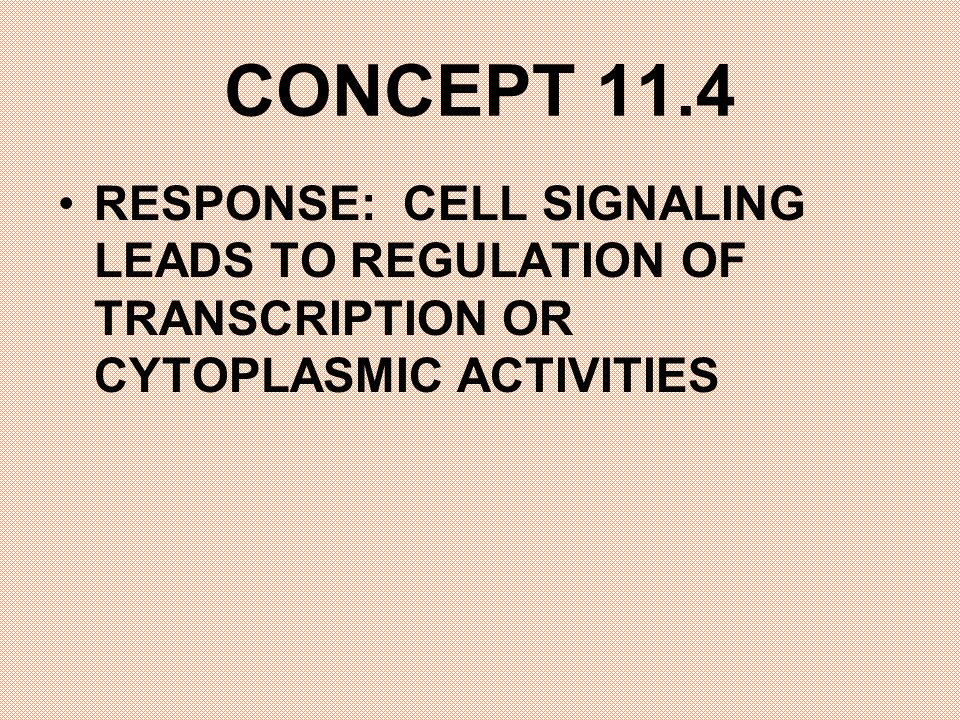 CONCEPT 11.4 RESPONSE: CELL SIGNALING LEADS TO REGULATION OF TRANSCRIPTION OR CYTOPLASMIC ACTIVITIES