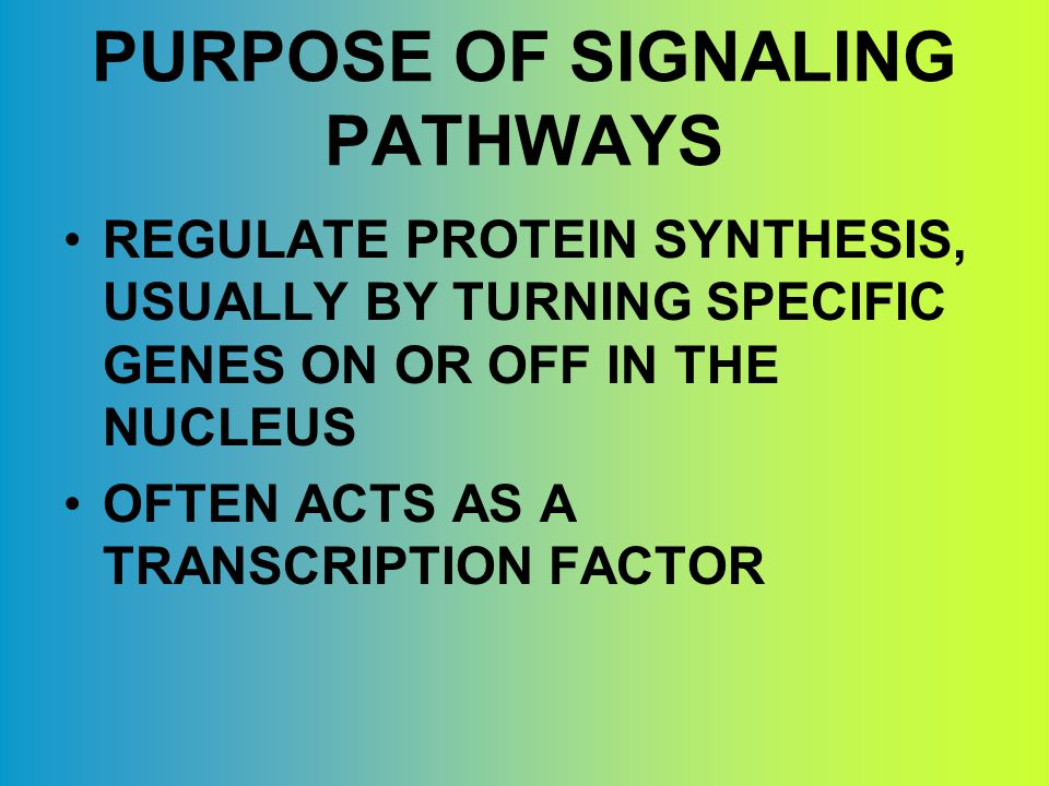 PURPOSE OF SIGNALING PATHWAYS REGULATE PROTEIN SYNTHESIS, USUALLY BY TURNING SPECIFIC GENES ON OR OFF IN THE NUCLEUS OFTEN ACTS AS A TRANSCRIPTION FACTOR