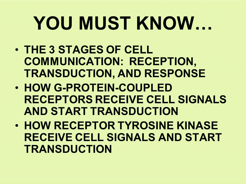 YOU MUST KNOW… THE 3 STAGES OF CELL COMMUNICATION: RECEPTION, TRANSDUCTION, AND RESPONSE HOW G-PROTEIN-COUPLED RECEPTORS RECEIVE CELL SIGNALS AND START TRANSDUCTION HOW RECEPTOR TYROSINE KINASE RECEIVE CELL SIGNALS AND START TRANSDUCTION