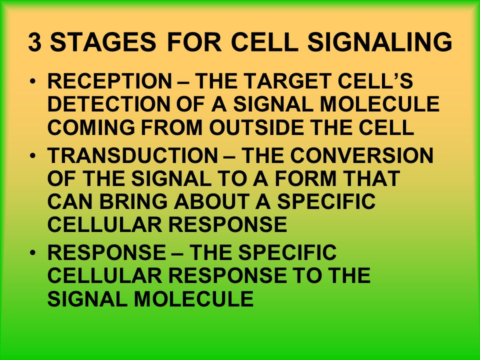 3 STAGES FOR CELL SIGNALING RECEPTION – THE TARGET CELL'S DETECTION OF A SIGNAL MOLECULE COMING FROM OUTSIDE THE CELL TRANSDUCTION – THE CONVERSION OF THE SIGNAL TO A FORM THAT CAN BRING ABOUT A SPECIFIC CELLULAR RESPONSE RESPONSE – THE SPECIFIC CELLULAR RESPONSE TO THE SIGNAL MOLECULE