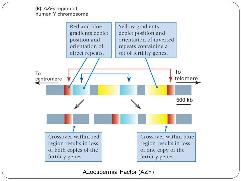 Azoospermia Factor (AZF)