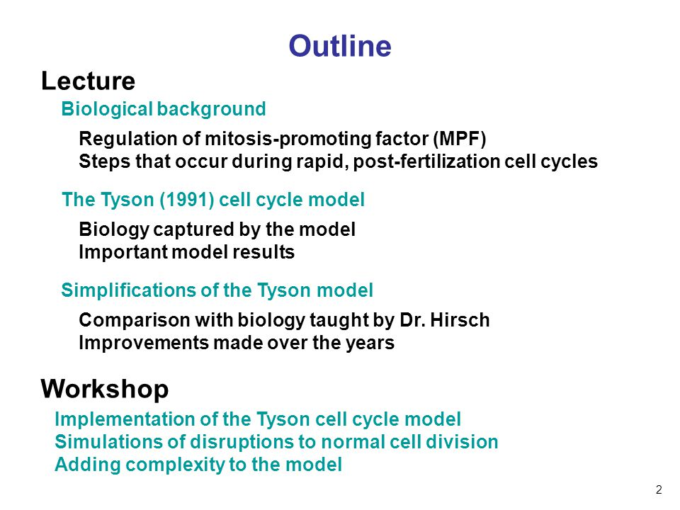 Outline Lecture Workshop Implementation of the Tyson cell cycle model Simulations of disruptions to normal cell division Adding complexity to the mode