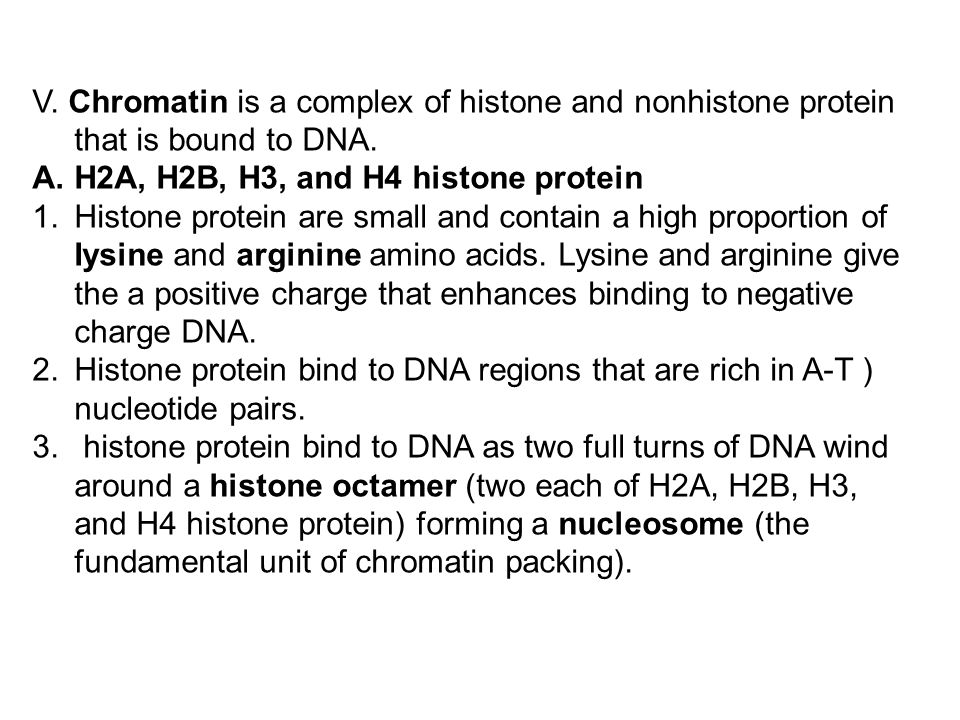 V. Chromatin is a complex of histone and nonhistone protein that is bound to DNA.