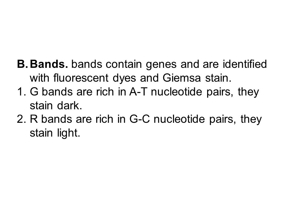 B.Bands. bands contain genes and are identified with fluorescent dyes and Giemsa stain. 1.G bands are rich in A-T nucleotide pairs, they stain dark. 2