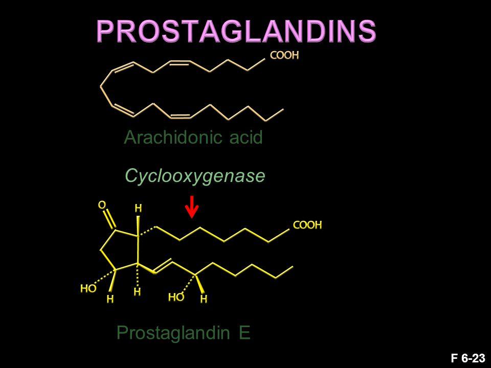 F 6-23 Arachidonic acid Prostaglandin E Cyclooxygenase