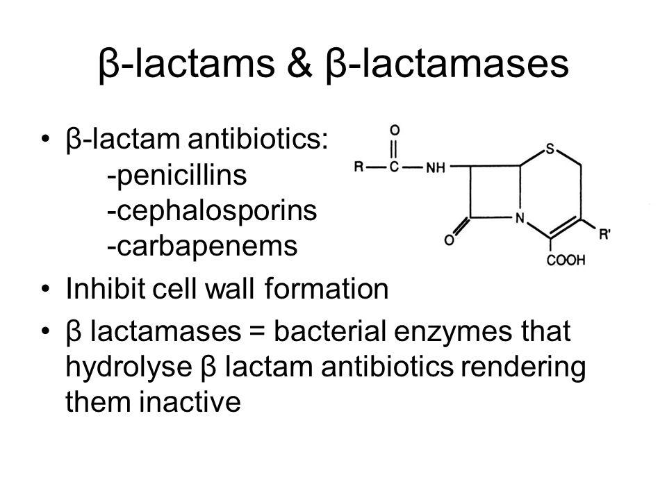 β-lactams & β-lactamases β-lactam antibiotics: -penicillins -cephalosporins -carbapenems Inhibit cell wall formation β lactamases = bacterial enzymes that hydrolyse β lactam antibiotics rendering them inactive