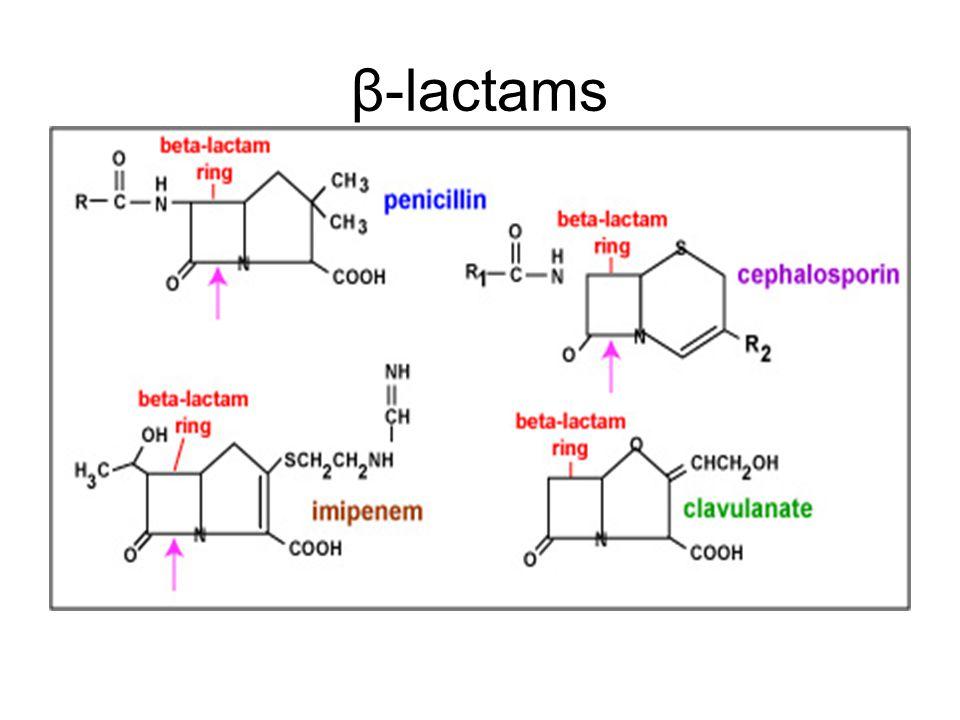 β-lactams