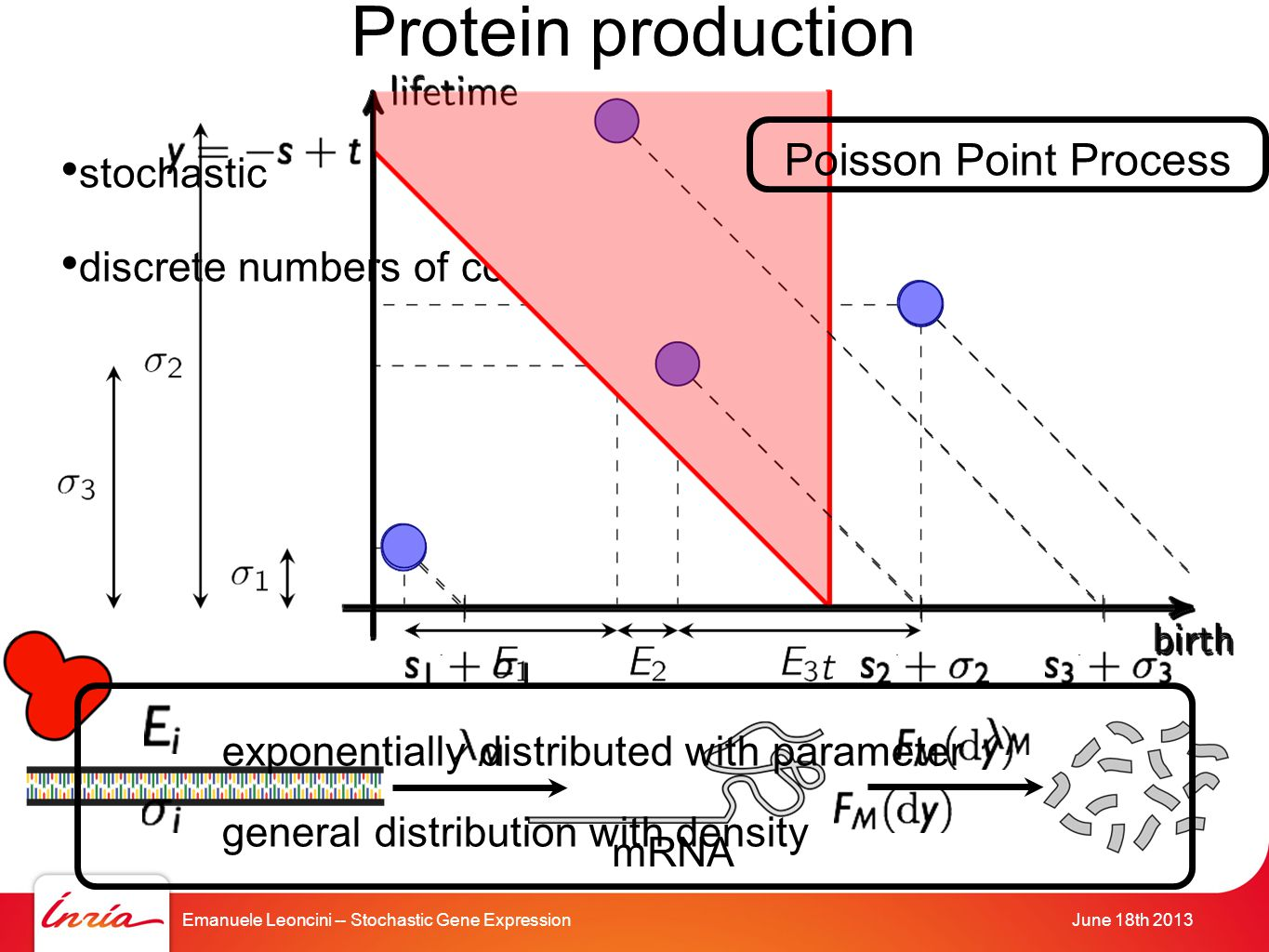 Emanuele Leoncini -- Stochastic Gene ExpressionJune 18th 2013 Protein production stochastic discrete numbers of components mRNA exponentially distributed with parameter general distribution with density Poisson Point Process
