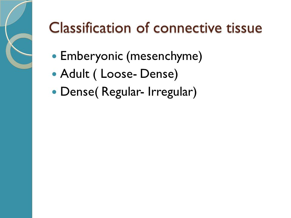 Classification of connective tissue Emberyonic (mesenchyme) Adult ( Loose- Dense) Dense( Regular- Irregular)