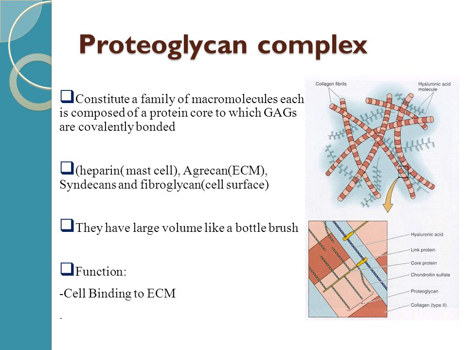 Proteoglycan complex  Constitute a family of macromolecules each is composed of a protein core to which GAGs are covalently bonded  (heparin( mast c
