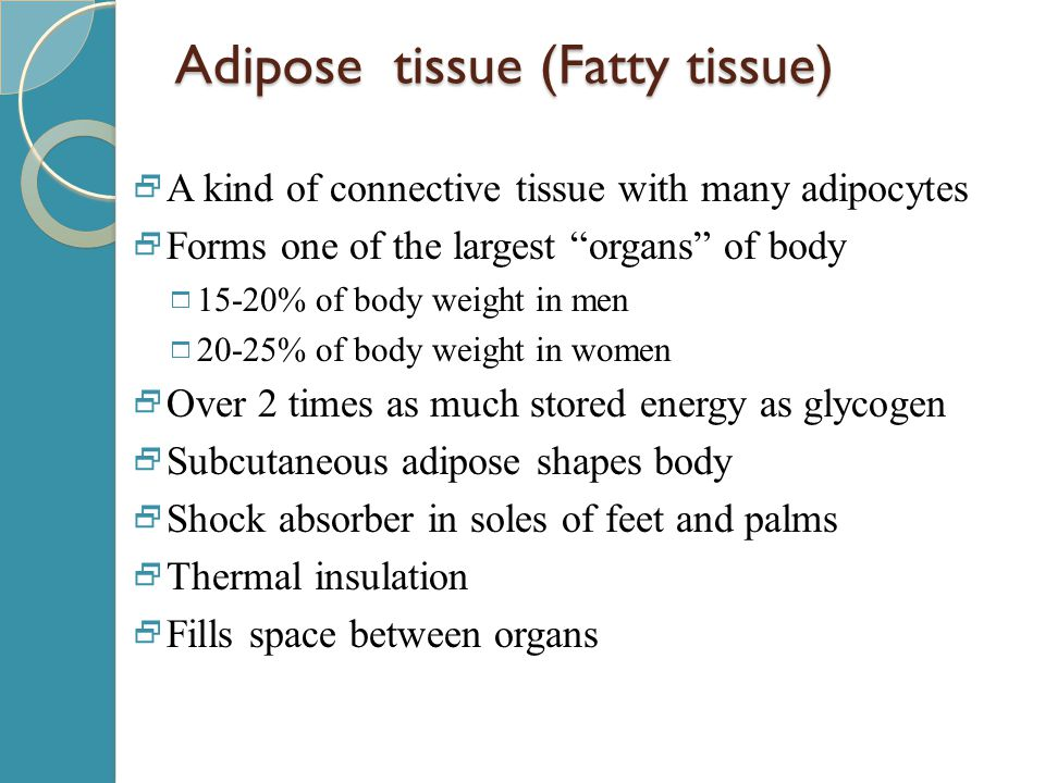 "Adipose tissue (Fatty tissue)  A kind of connective tissue with many adipocytes  Forms one of the largest ""organs"" of body  15-20% of body weight i"