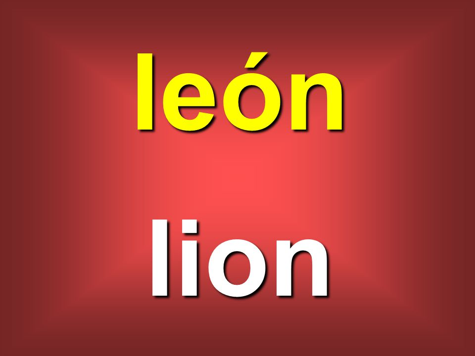 león lion
