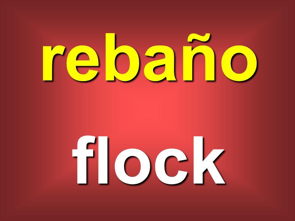 rebaño flock