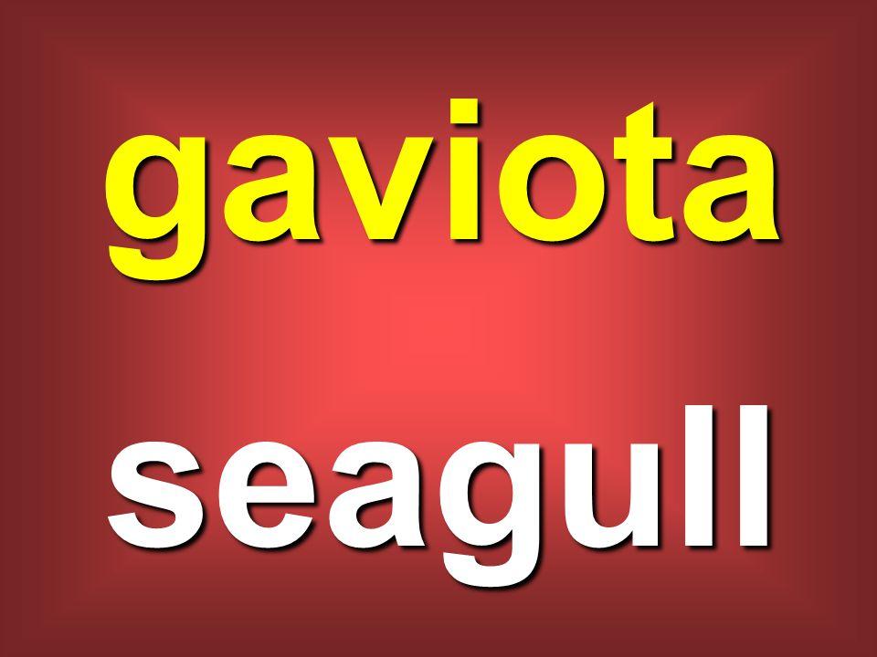 gaviota seagull