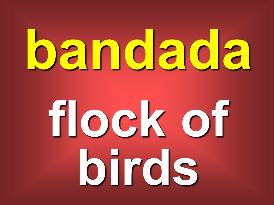 bandada flock of birds