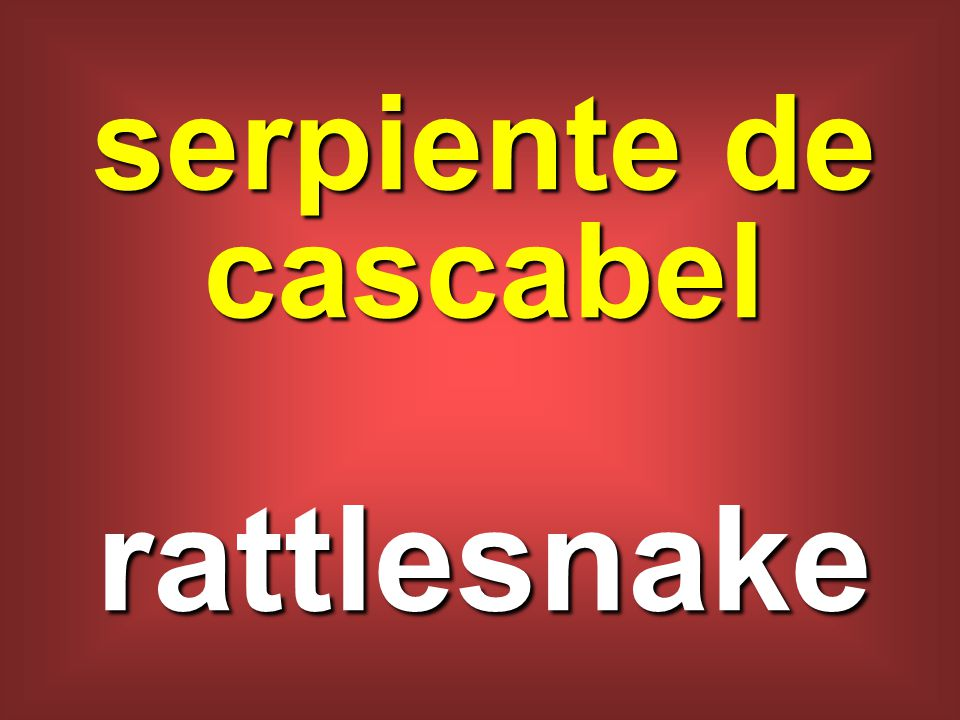 serpiente de cascabel rattlesnake