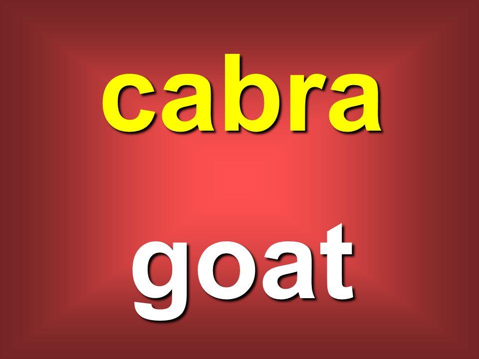 cabra goat