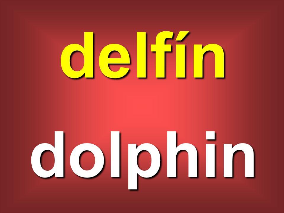 delfín dolphin