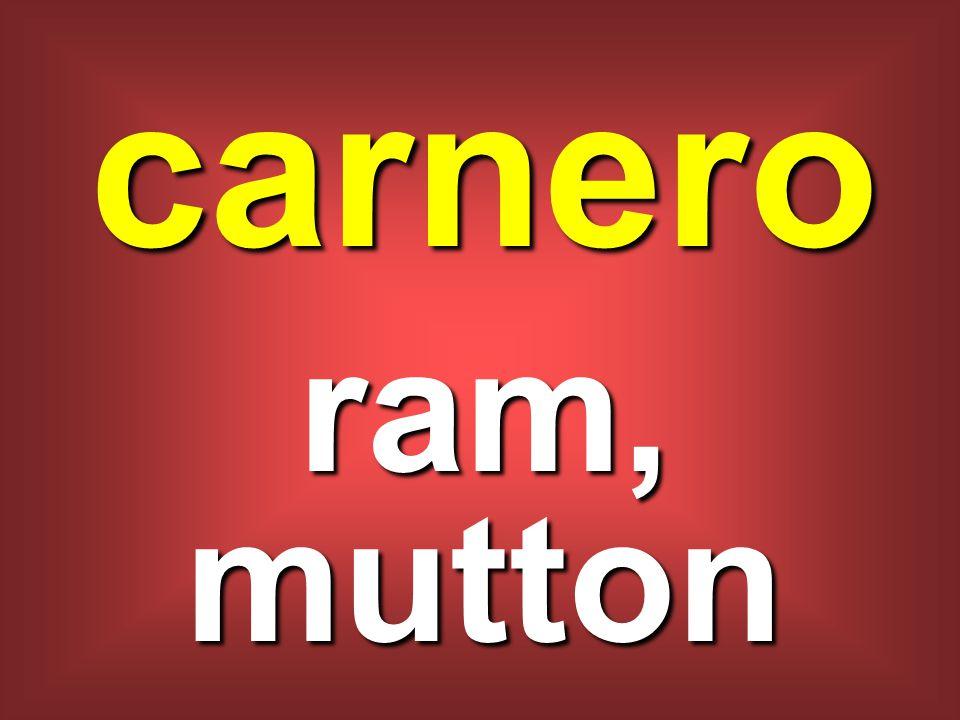 carnero ram, mutton