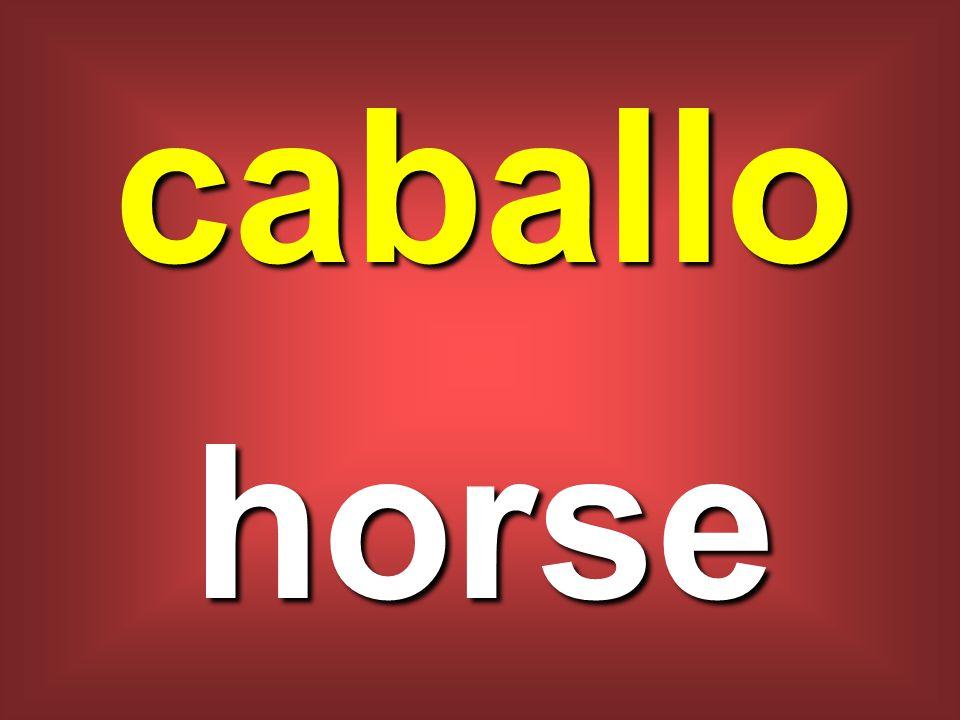 caballo horse
