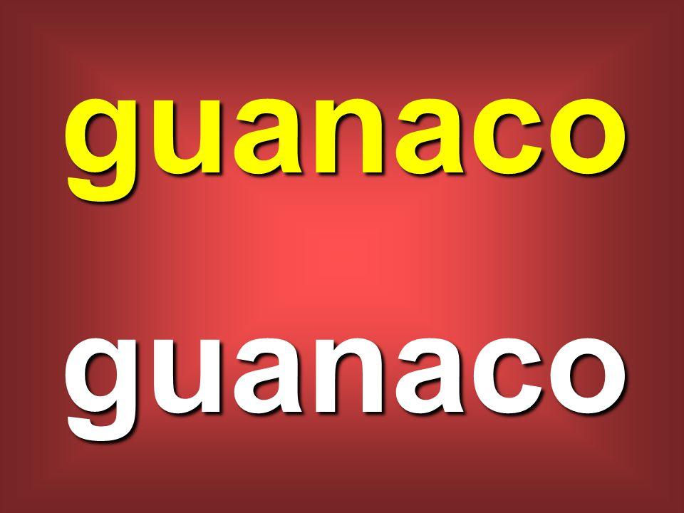guanaco guanaco