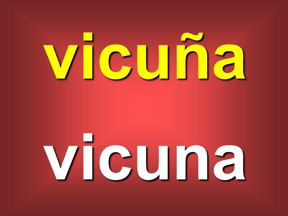 vicuña vicuna