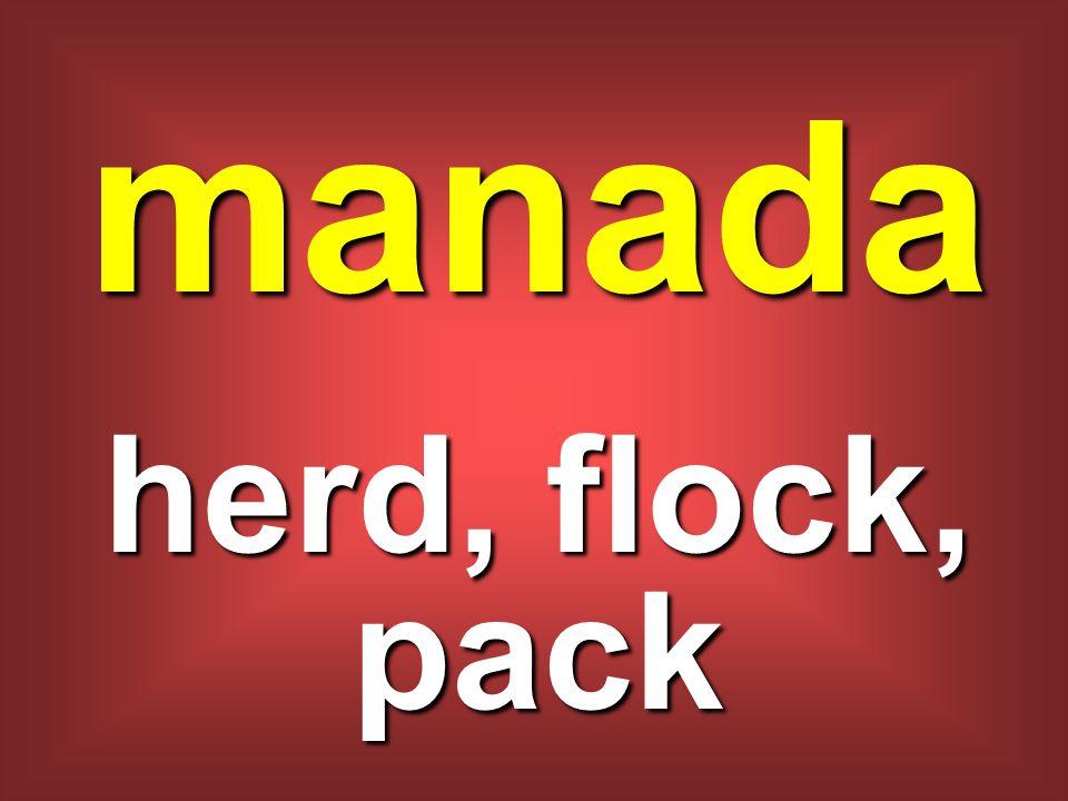 manada herd, flock, pack