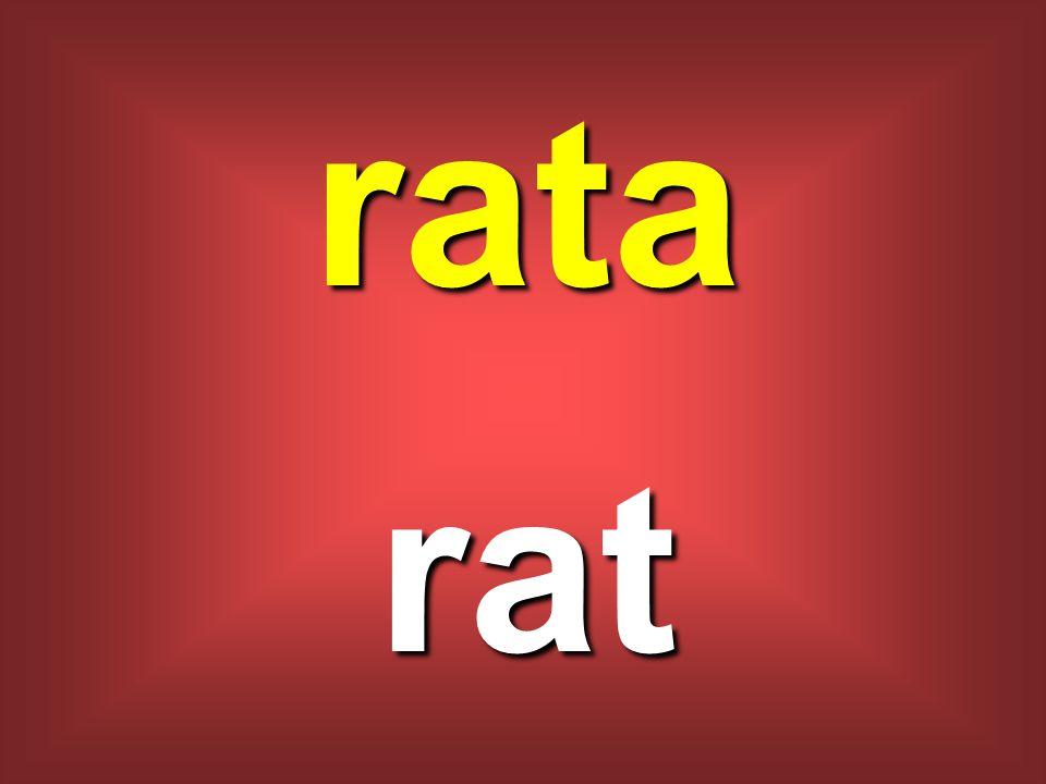 rata rat