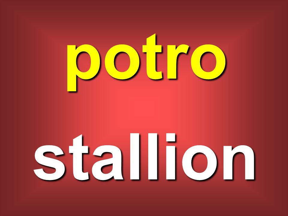 potro stallion