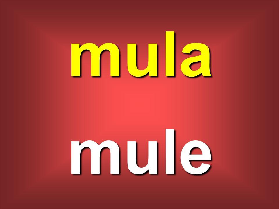mula mule