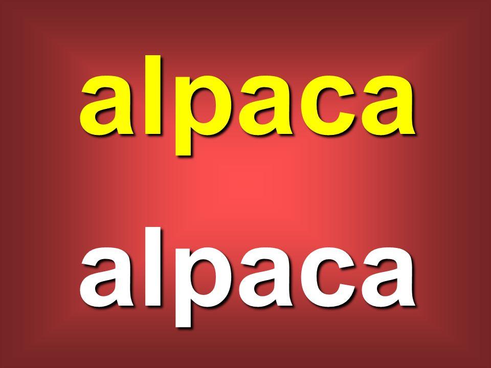 alpaca alpaca