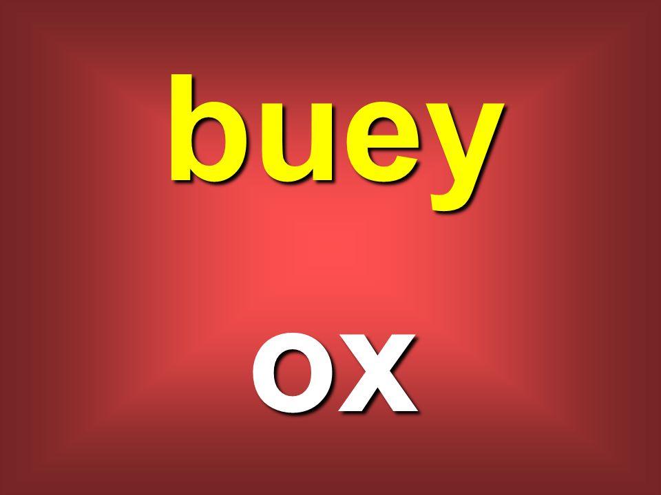 buey ox
