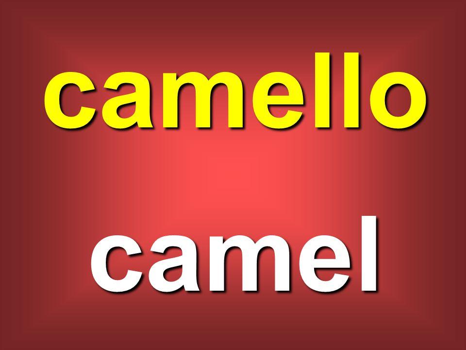 camello camel