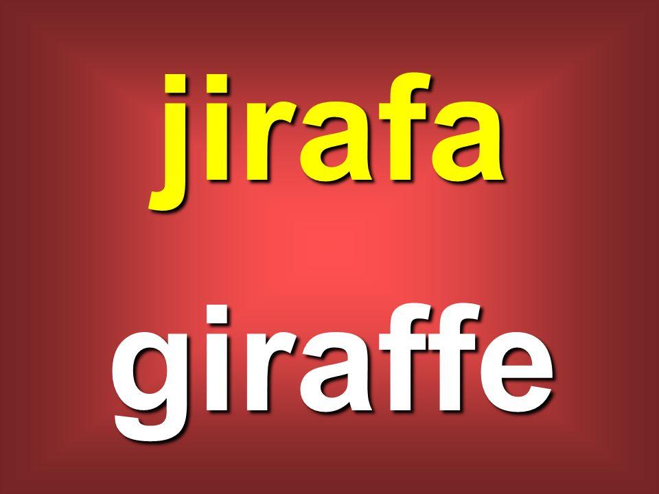 jirafa giraffe