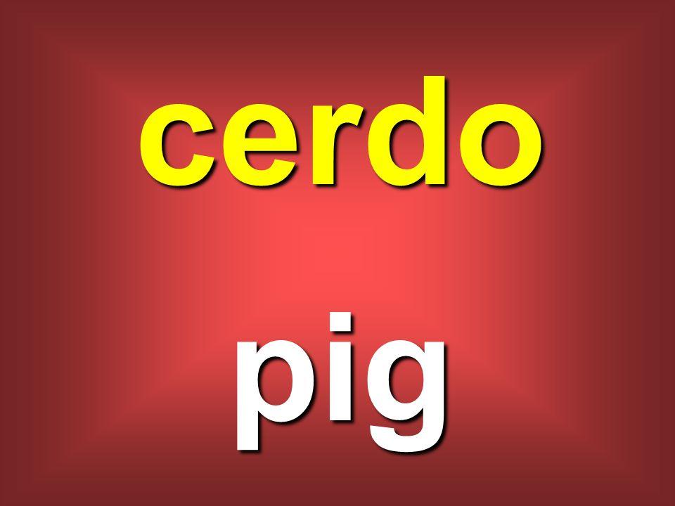 cerdo pig