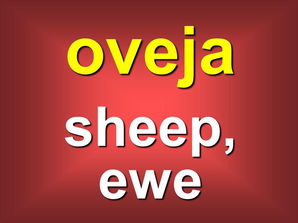 oveja sheep, ewe