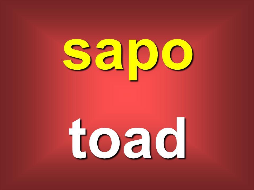 sapo toad
