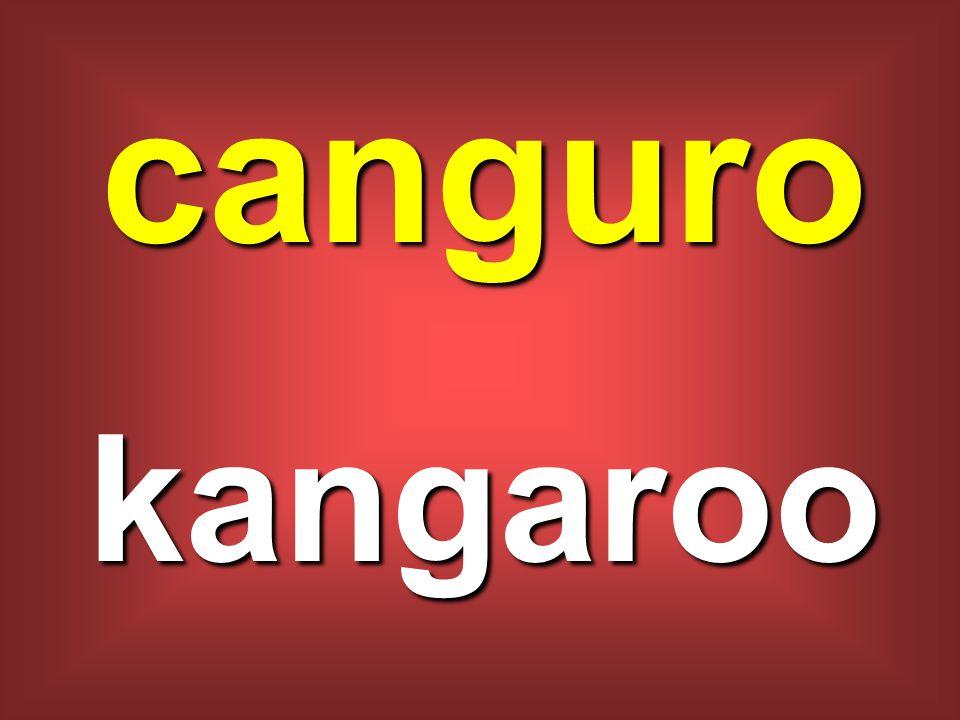 canguro kangaroo