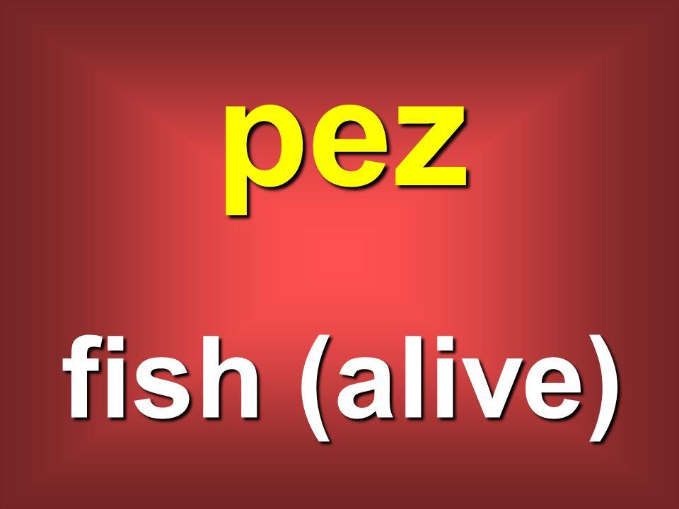 pez fish (alive)
