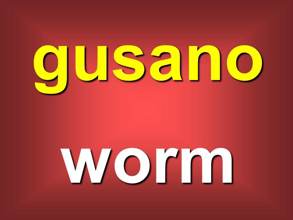 gusano worm