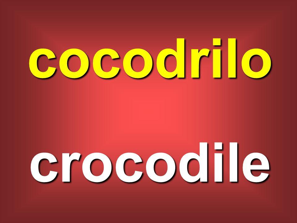 cocodrilo crocodile