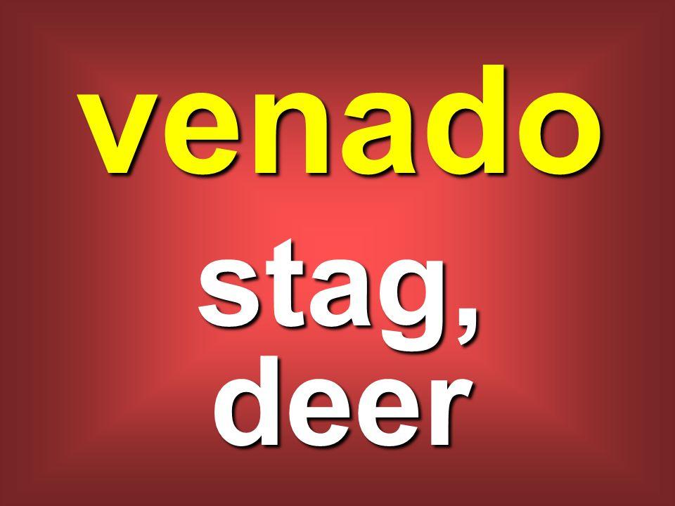 venado stag, deer