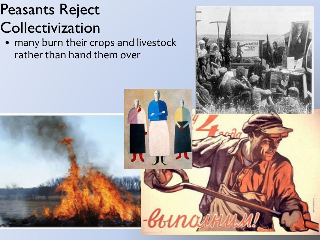Peasants Reject Collectivization many burn their crops and livestock rather than hand them over