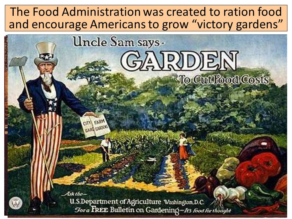 "The Food Administration was created to ration food and encourage Americans to grow ""victory gardens"""