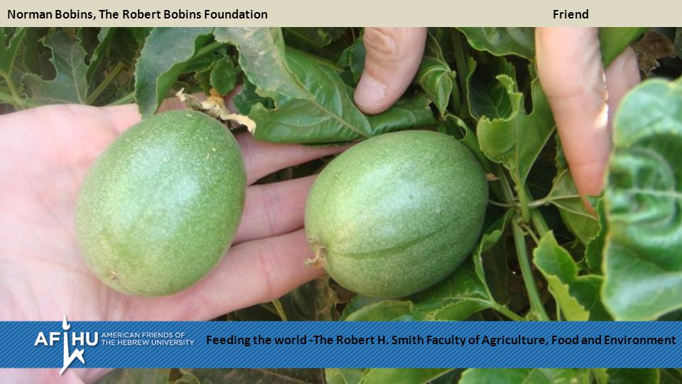 Norman Bobins, The Robert Bobins Foundation Friend Feeding the world -The Robert H.