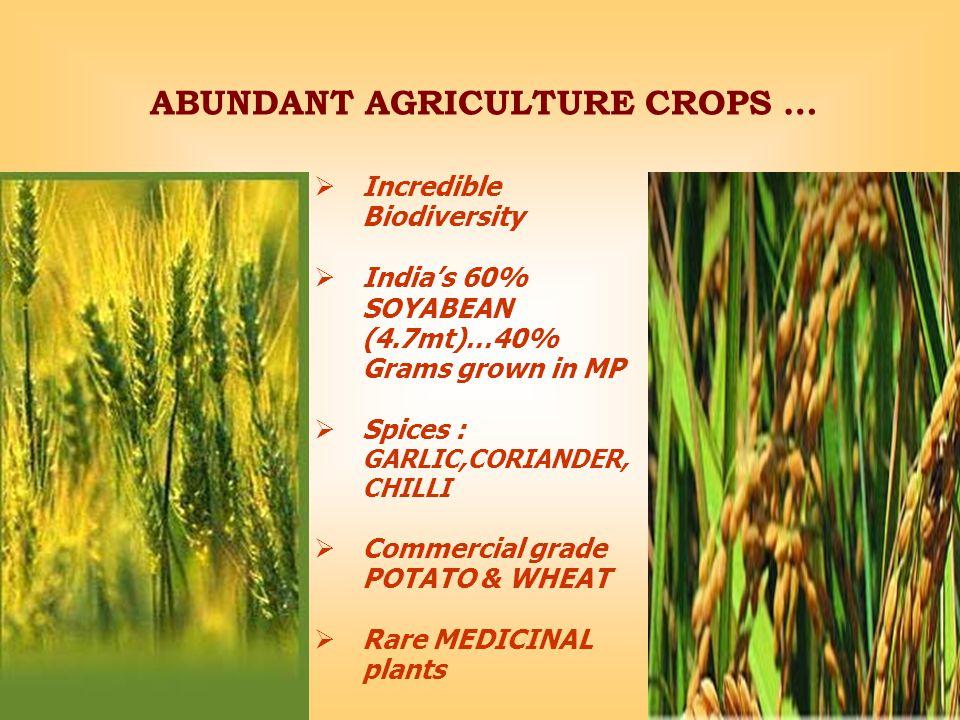 ABUNDANT AGRICULTURE CROPS …  Incredible Biodiversity  India's 60% SOYABEAN (4.7mt)…40% Grams grown in MP  Spices : GARLIC,CORIANDER, CHILLI  Commercial grade POTATO & WHEAT  Rare MEDICINAL plants