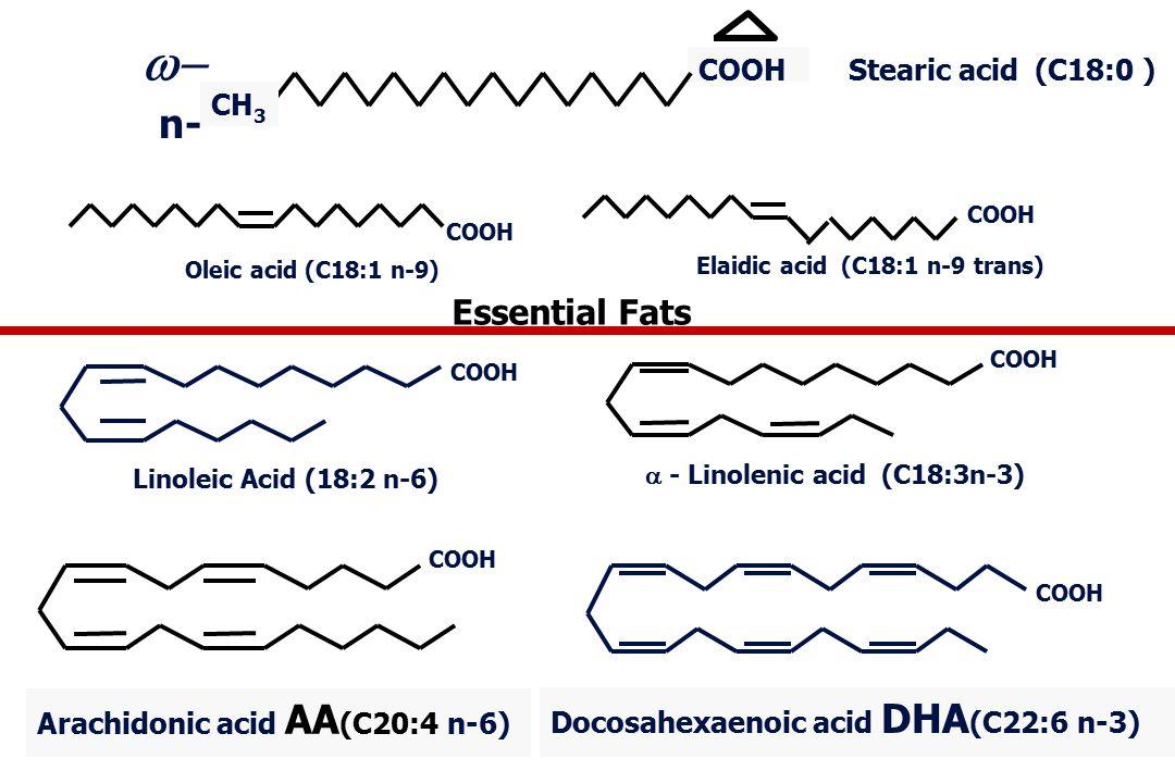 Docosahexaenoic acid DHA (C22:6 n-3) Linoleic Acid (18:2 n-6) COOH Oleic acid (C18:1 n-9) Elaidic acid (C18:1 n-9 trans) COOH Arachidonic acid AA (C20:4 n-6)  - Linolenic acid (C18:3n-3) COOH Stearic acid (C18:0 ) CH 3  n- Essential Fats